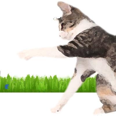 Paura dei gatti