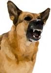 Cani che mordono o ringhiano