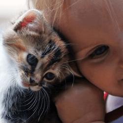 Incontri preparativi arrivo neonato gatto