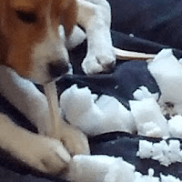 Seduta comportamentale riabilitativa cane