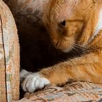 Seduta comportamentale riabilitativa gatto