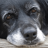 Visita comportamentale animali anziani cane