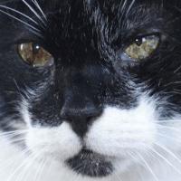 Visita comportamentale animali anziani gatto