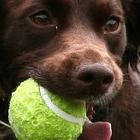 Visita comportamentale animali giovani problematici cane