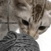 Visita comportamentale animali giovani problematici gatto