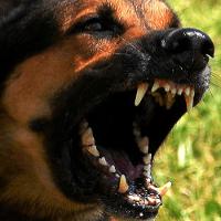 Visita comportamentale cane