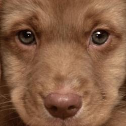 Visita preadozione cane