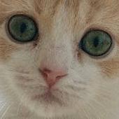 Visita preadozione gatto