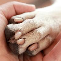 Visita valutazione pericolosità cane