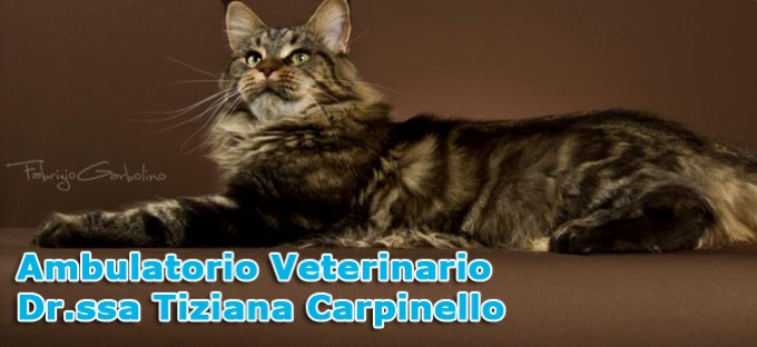 Ambulatorio veterinario Dr.ssa Tiziana Carpinello