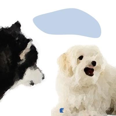 Non va d'accordo con altri cani