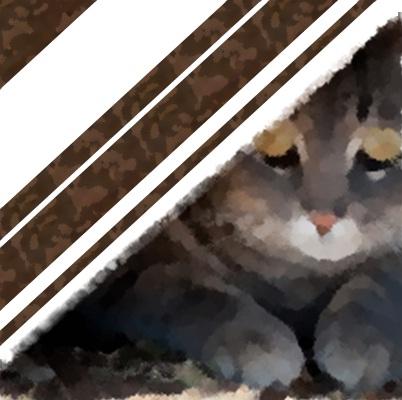 Gatti che hanno paura