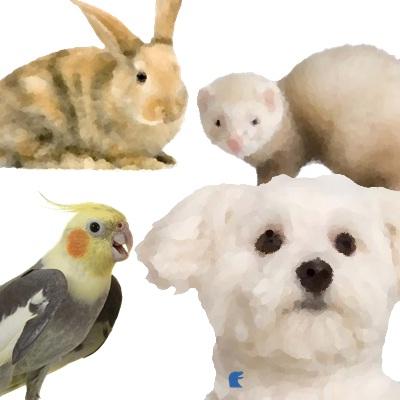 Paura degli altri animali (cani, conigli, furetti, ecc)