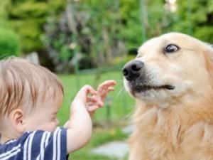 QC-capiamo-il-cane-dom10