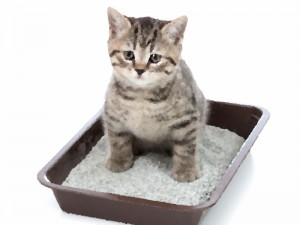 gatto-lettiera2