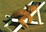 Si parte… e il gatto dove lo metto?