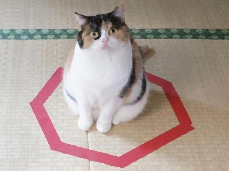gatto-cerchio1