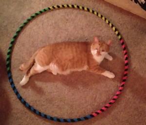 gatto-cerchio2