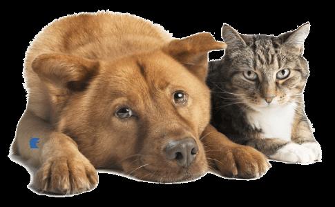 veterinario comportamentalista Torino