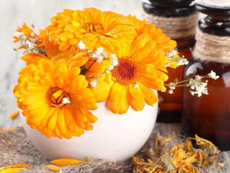 medicina alternativa - floriterapia