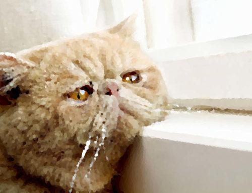 I segnali di un gatto stressato