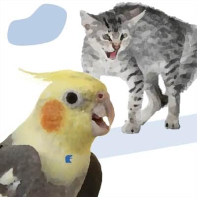 non va d'accordo con altri animali