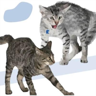 non va d'accordo con altri gatti