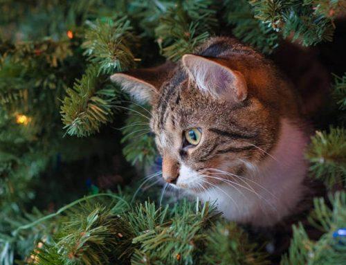 I gatti e il loro spirito natalizio